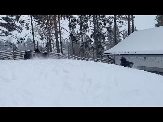 2 mars Vintern är här igen!