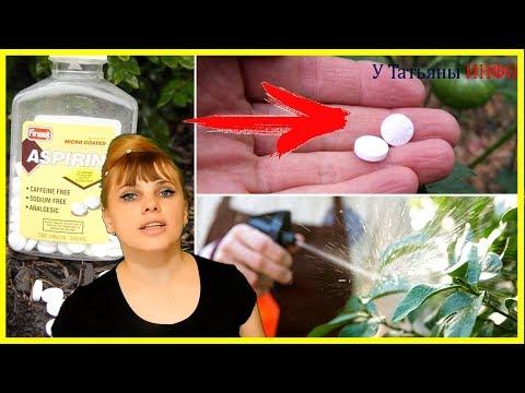 ПОСАДИТЕ таблетки АСПИРИНА в саду! Эффект - ошеломиссимо!!!