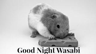 Good Night Wasabi