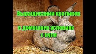 Разведение кроликов как бизнес - кролиководство