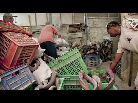 Shofar Manufacturing In Israel Since 1947