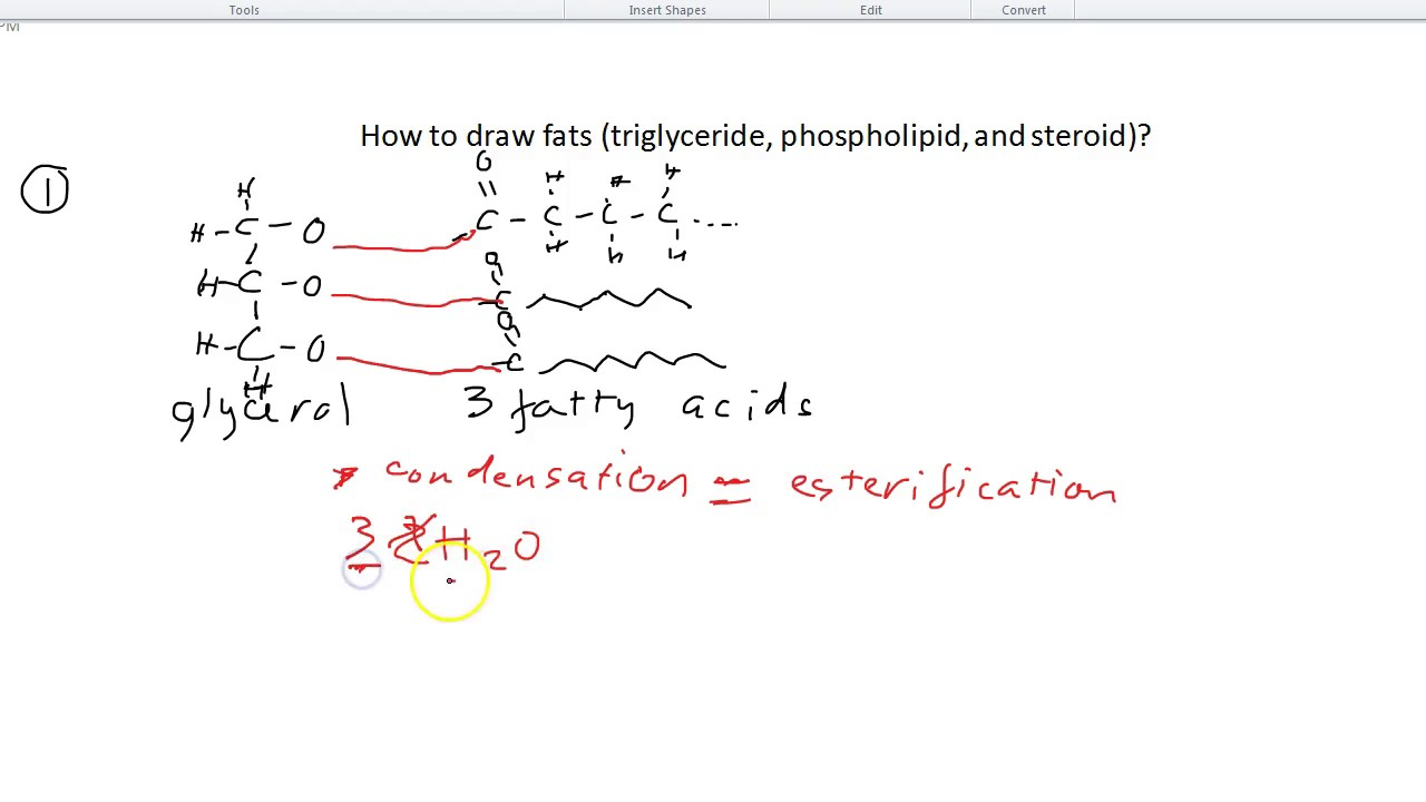 b3 how to draw fats  triglyceride  phospholipid  and steroid