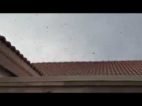 Bee Removal Mesa AZ - Dog in a Dangerous Situation