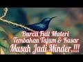 Masteran Burung Kolibri Ninja Full Isian Cililin Jangkrik Rambatan Super Berisik  Mp3 - Mp4 Download