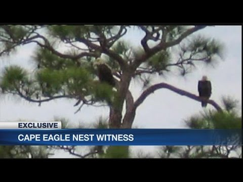 Witnesses come forward in case of destroyed bald eagle's nest