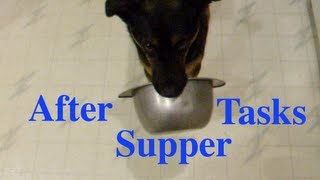 Clicker Trained Dog Doing After Supper Tasks-fetch Your Bowl And Shut The Door