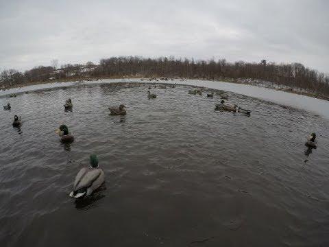 Ice Eater Duck Hunt