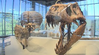 Bigger is better at Seattle's brand new Burke Museum - KING 5 Evening