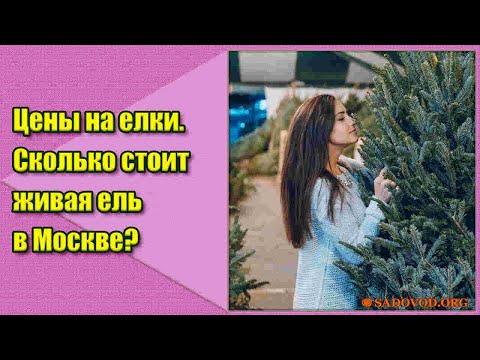 Цены на елки. Сколько стоит живая елка в Москве?