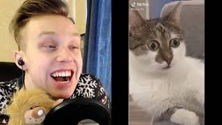 Я ржал в течение часа Самые сумасшедшие кошки раздражают людей Смешные видео о кошках