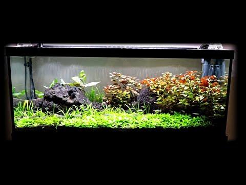 20 Gallon Long AquaScape Update   Bladder Snails?