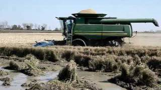 John Deere Combine in Rice thumbnail