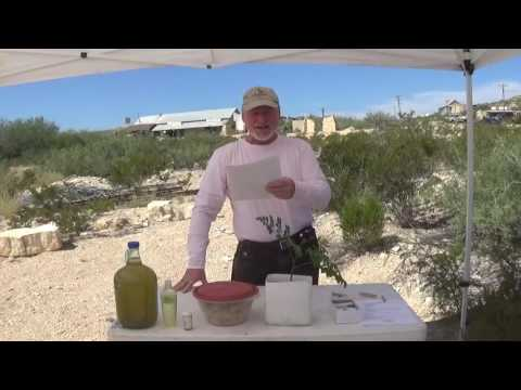 "Moringa Presentation At The Terlingua, TX ""Green Scene"" Festival"