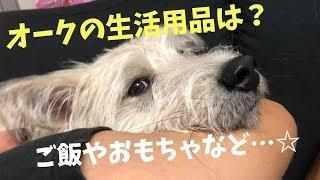 元野犬オーク☆オークって何食べてる?何で遊ぶ?など生活について★(^^)あと…オークって〇〇に似てませんか?