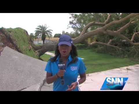 SNN: 50 foot tree falls on Venice home after Hurricane Irma