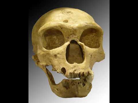 Neanderthal   Wikipedia Audio Article