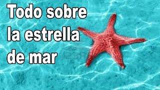 curiosidades sobre la estrella de mar