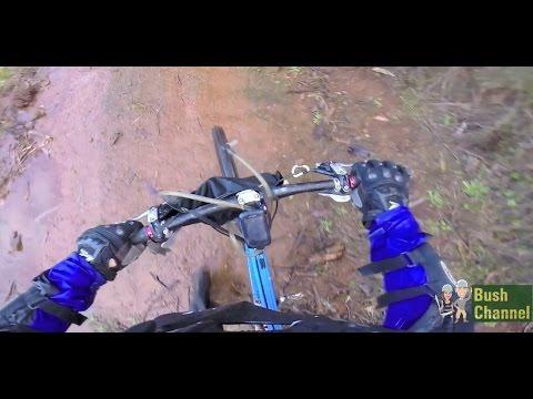 Downhill MTB GoPro footage in a Pine Plantation