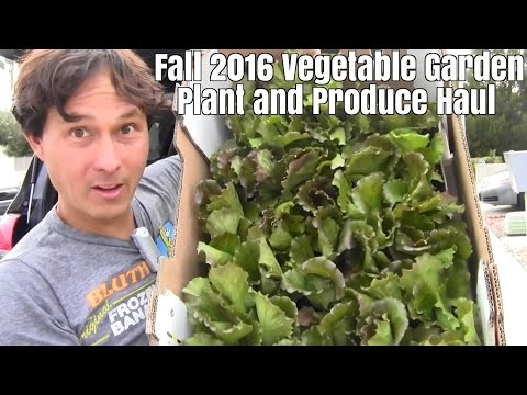 Fall 2016 Vegetable Garden Plant & Produce Haul
