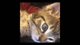 Very cute Kittens in Pics. Video of Beautiful Cat.  Funny kitty.  Beautiful cats and kittens.