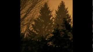 If These Trees Could Talk - From Roots To Needles