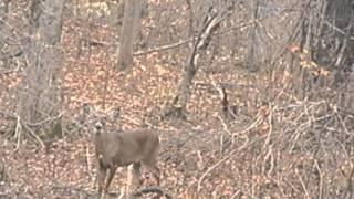 Crazy Deer Hunting Footage
