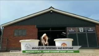 Нидерландская корова спрогнозировала победителя Лиги Европы