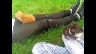 Котята.Maria Flash.