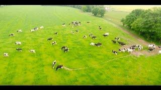 SOS PROTEIN : Elevage bovin lait - Pays de la Loire