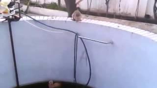 Кошка сбросила кота в бассейн и не дает ему от туда выбраться ПРИКОЛ Смешные приколы с кошками1