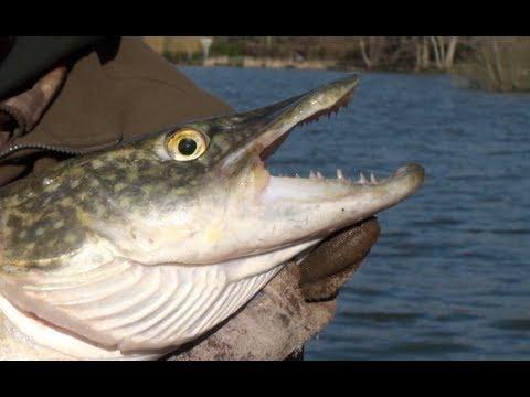 Pike Fishing At Bury Hill Old Lake ( Part 1 )