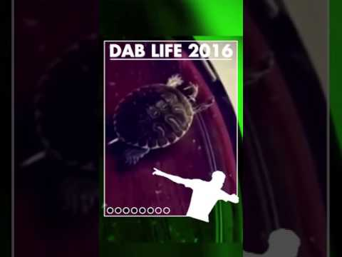 Even animals joined the dab life 😂