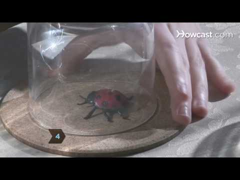 how-to-get-rid-of-spiders