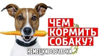 Каким кормом кормить собак.Что выгоднее или даже вкуснее.