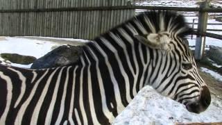 この動物園ではペレットを売っていて色んな動物に餌をあげられます。 シ...