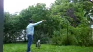 Bullterrier Jump