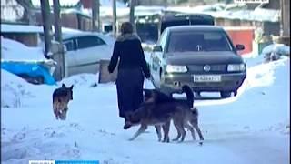 Бездомных животных в Красноярске вновь намерены усыплять