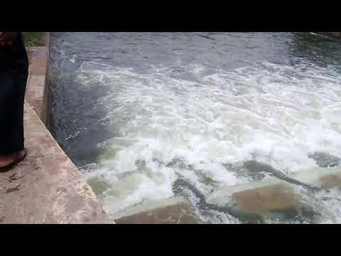 Very Rare scene of cavari river