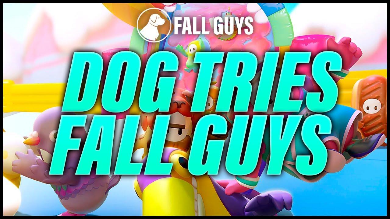 Dog Plays Fall Guys | Dogdog Tries