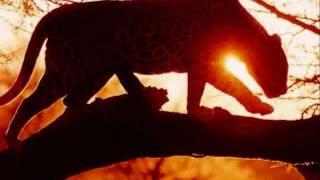 Geoffrey Oryema - Solitude