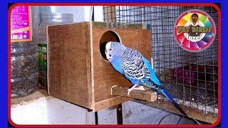 How to make Budgies breeding box