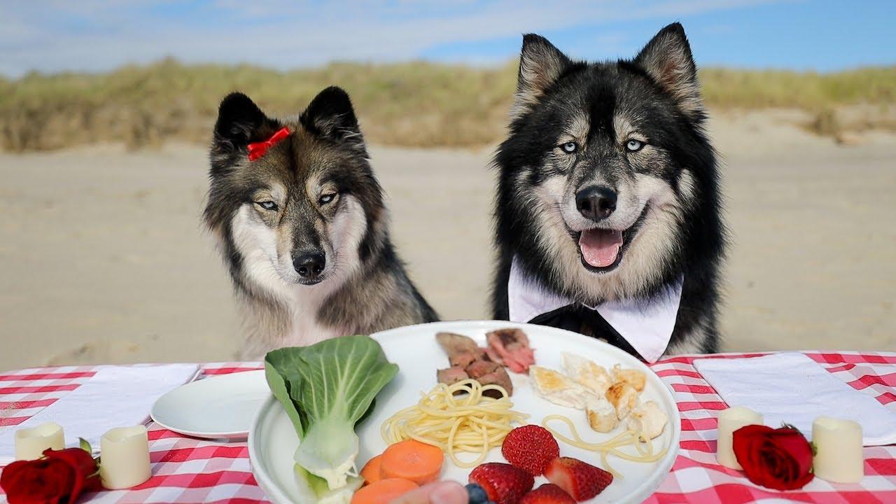 Husky Reviews Dinner Date With Boyfriend!