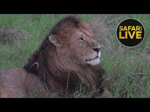 safariLIVE - Sunset Safari - December 22, 2018