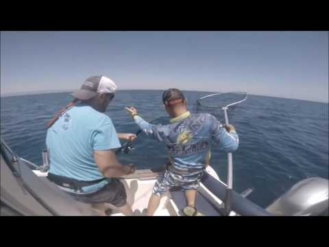 Spinning For Bluefish & Popping For Tuna Delta Del Ebro