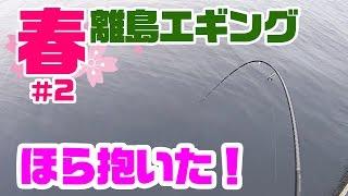 春の離島でアオリイカを狙え!離島エギング#2 thumbnail