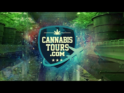 CannabisTours.com - Cannabis Hospitality, Tourism, Hotels Done Right. #StayHighFam