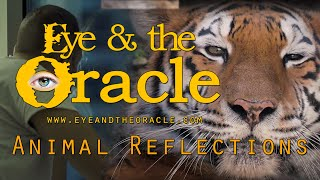 """""""Animal Reflections"""" from Eye and the Oracle"""