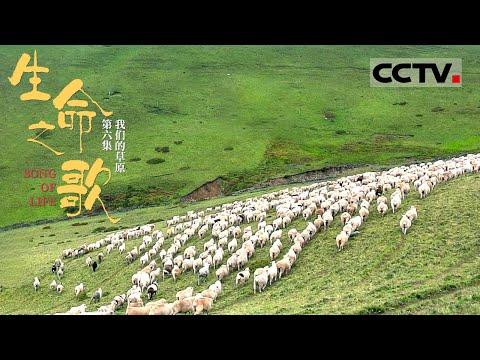 中國-生命之歌-EP 06-這裡是放牧人的天堂一匹馬一群羊畫面美極了!