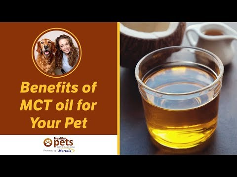 Dr  Becker Discusses MCT Oil