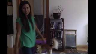 How To Teach A Dog To Jump Through A Hoop